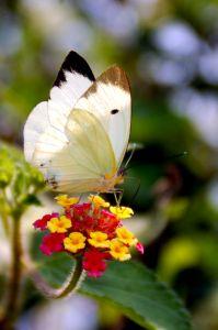 885321_buterfly